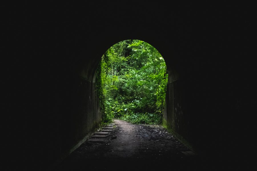 green-leafed tree outside tunnel